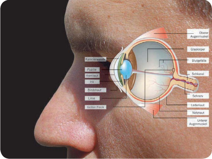 Detailansicht des menschlichen Auges.
