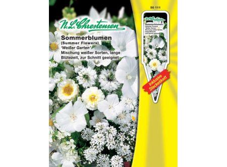 Sommerblumen Weißer Garten einjährig