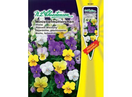 Viola cornuta Ministiefm. Hornveilchen