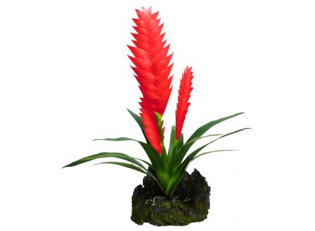 Bromelie rot, 3 Blüten bei handwerker-versand.de günstig kaufen