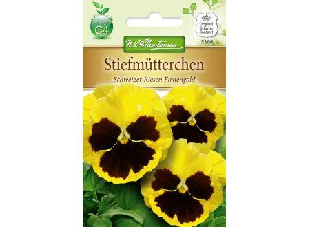 Viola wittrockiana Schweier Riesen
