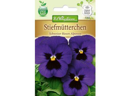 Viola wittrockiana Schweizer Riesen