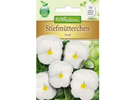 Viola wittrockiana Weiß
