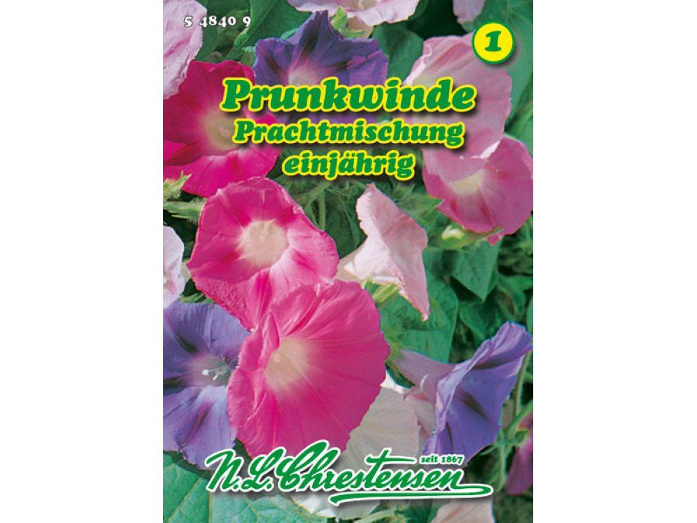 Pharbitis purpurea - Prunkwinde - Prachtmischung