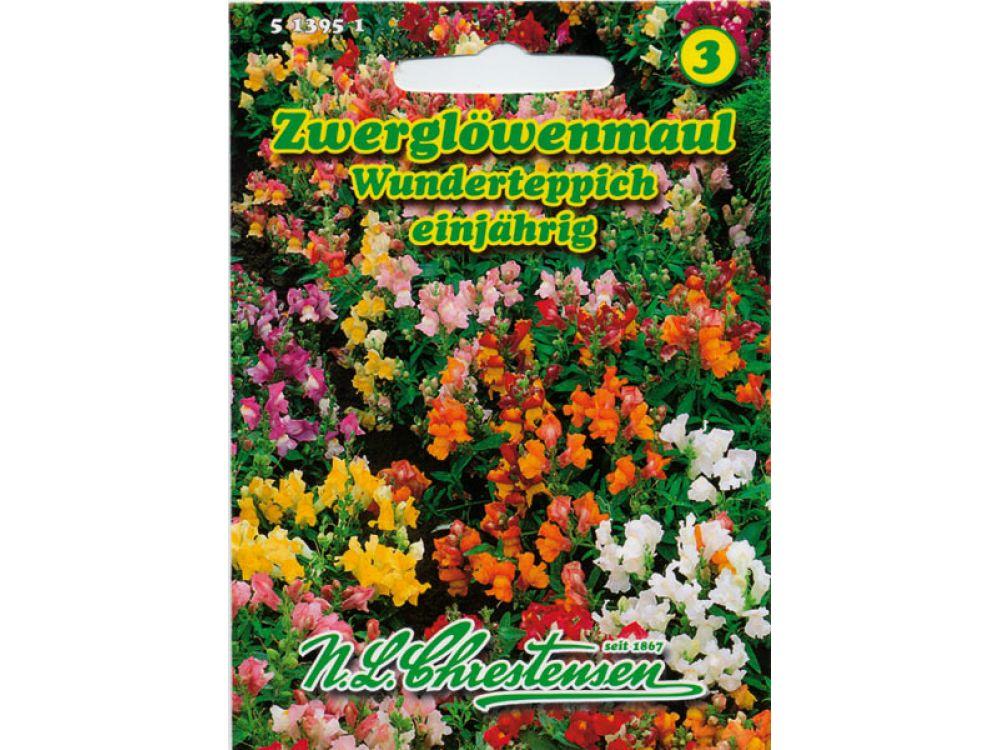 Antirrhinum majus pumilum - Zwerglöwenmaul - Wunderteppich