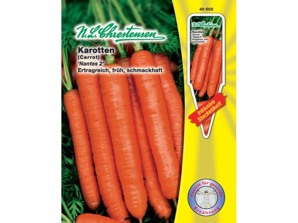 Karotten - Nantes 2 / Daucus carota
