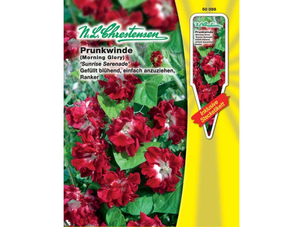 Pharbitis purpurea / Ipomea - Prunkwinde - Sunrise Serenade