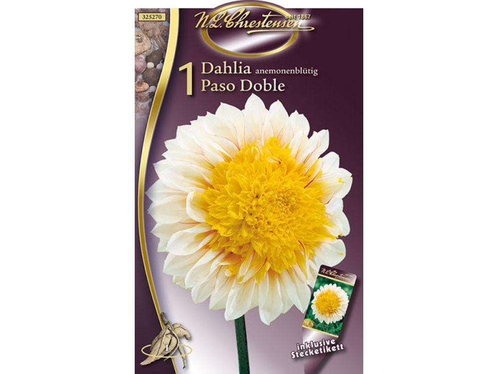 Dahlien Paso Doble anemonenblütig