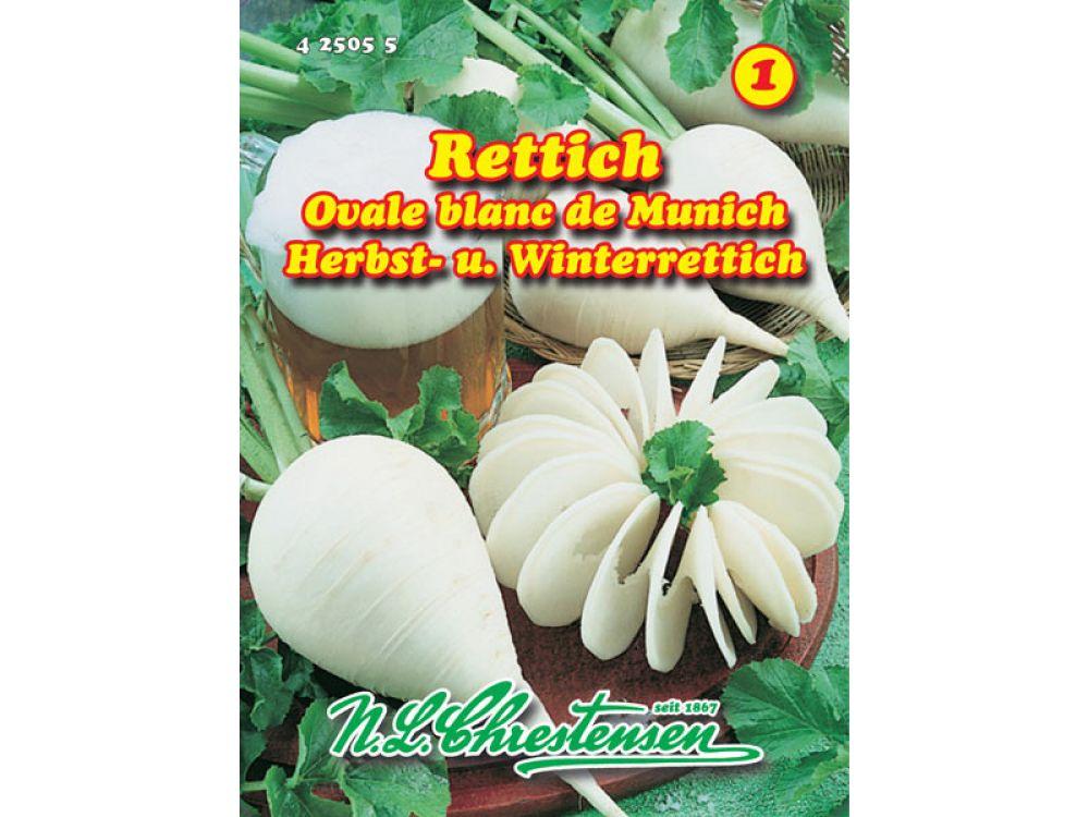 Rettich - Ovale blanc de Munich
